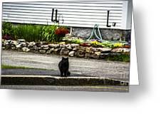 Kitty Across The Street  Greeting Card