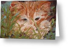 Kitty Adventures Greeting Card