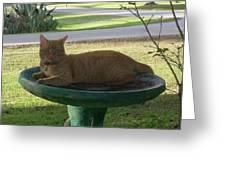 Kitty Bird Bath Greeting Card