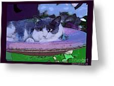 Kitty Blue Greeting Card