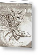 Kitty Cat Greeting Card