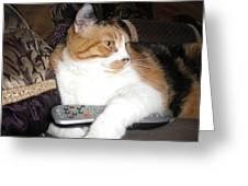 Kitty Control Greeting Card