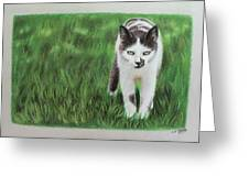 Kitty Grass Greeting Card