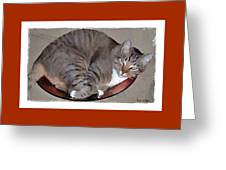 Kitty In A Bowl Greeting Card
