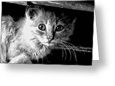 Kitty In Black White Greeting Card