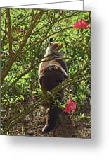 Kitty In The Roses Greeting Card