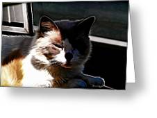 Kitty In The Shadow Greeting Card