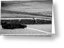 Kitty In The Street Black And White Greeting Card