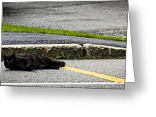 Kitty In The Street Greeting Card