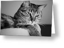 Kitty Lounge Greeting Card