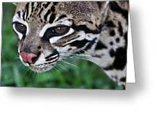 Kitty Ocelot 1 Greeting Card