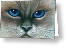 Kitty Starry Eyes Greeting Card