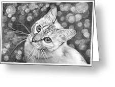 Kitty The Cat Greeting Card