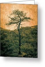 Knarly Tree Greeting Card