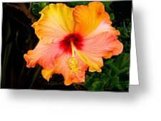 Knightsbridge Hibiscus Greeting Card