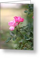 Knock Out Rose Greeting Card