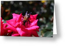 Knockout Rose And Bumblebee Greeting Card