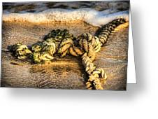 Knot Again... Greeting Card