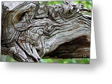 Knotty Tree Greeting Card