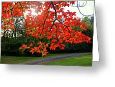Knox Park 8444 Greeting Card by Guy Whiteley