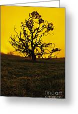 Koa Tree Silhouette Greeting Card