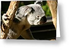 Koala Bear 2 Greeting Card
