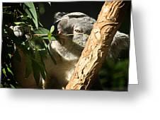 Koala Bear 3 Greeting Card