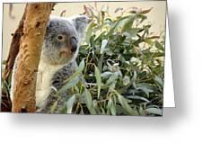 Koala Bear I Greeting Card