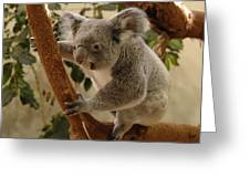 Koala Bear II Greeting Card
