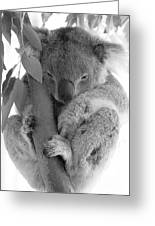Koala Bear Greeting Card by Terry Burgess