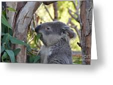 Koala Time Greeting Card