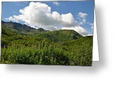 Kodiak Greenery Greeting Card