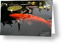 Koi Fish 4 Greeting Card