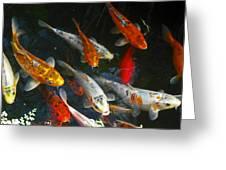 Koi Fish IIi Greeting Card