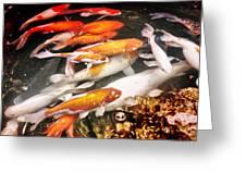 Koi Fish Pond Greeting Card