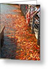Koi Fishes In Feeding Frenzy Part Two Greeting Card