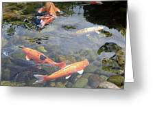 Koi In Pond II Greeting Card