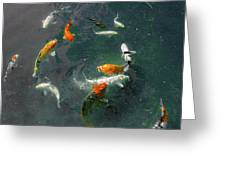 Koi Symphony 2 Stylized Greeting Card