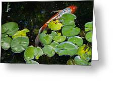 Koi With Lily Pads A Greeting Card
