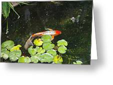 Koi With Lily Pads B Greeting Card
