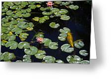 Koi With Lily Pads E Greeting Card