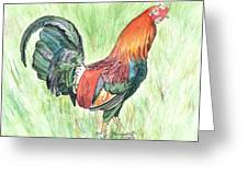 Kokee Rooster Greeting Card