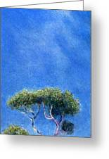 Kokee Trees Greeting Card