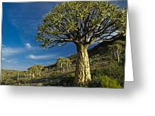 Kokerboom Greeting Card