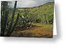 Koko Caldera Greeting Card