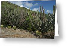 Koko Crater Cacti Greeting Card