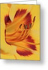 Kokomo Sunset 05 - Daylily Greeting Card