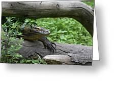 Komodo Dragon Climbing Over A Fallen Tree Greeting Card