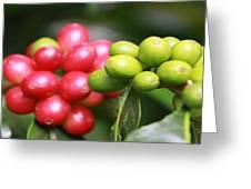 Kona Coffee Greeting Card