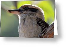 Kookaburra On A Branch Greeting Card